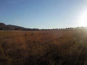 Stonecrest farm